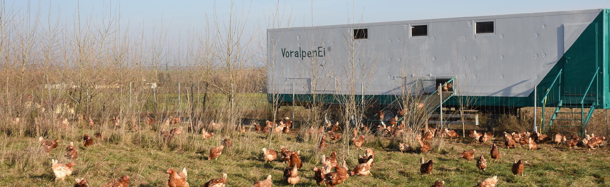 bester Preis für Bio-Eier aus mobiler Freilandhaltung